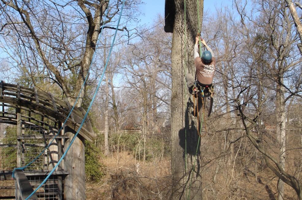 Arborists remove hazardous branches near Martin Puryear's <em>Pavilion in the Trees</em> (1993). Photo © Association for Public Art