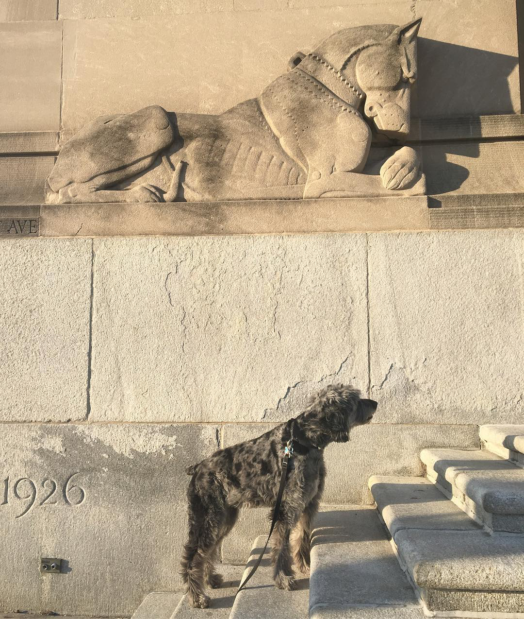Duke the Aussiedoodle in front of a sculpture of a dog